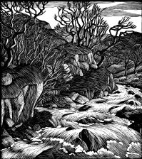 wood-engraving original print: Trout Stream 1, for the dust-jacket of Loved River
